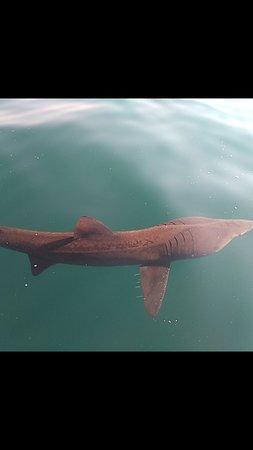 Bolhas tours-tubarão frade
