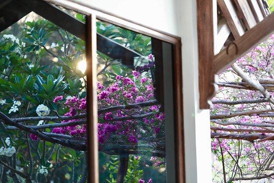 beautiful garden reflections and sunsets at villasunsetbeach.com