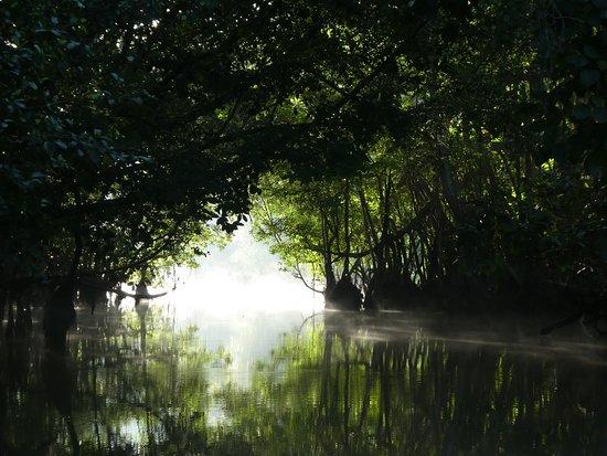 Kinabatangan District, Malaysia: Along the river