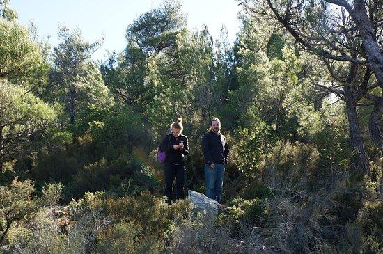 Armenistis, Greece: Forest