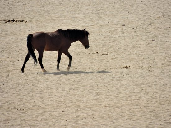 Namib-Naukluft Park, Namibia: Namib Naukluft Park , cavallo del deserto Maggio 2018