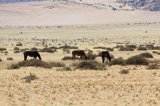 Namib-Naukluft Park, Namibia: Namib Naukluft Park , cavalli del deserto Maggio 2018