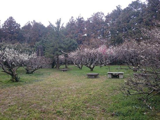 Oidajosekibairin Park
