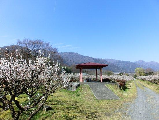 Minamino Plum Garden