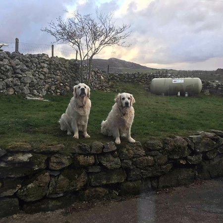 Garndolbenmaen, UK: Beautiful rural setting, great for dogs
