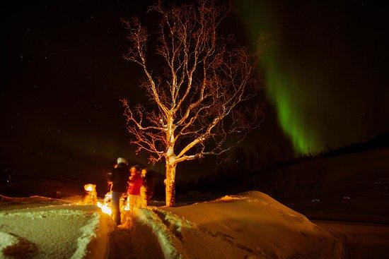 Aurora Chase Narvik
