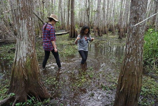 Ganztägiges Kajak-Abenteuer in den Everglades Foto