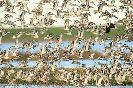 WWT Welney Wetland Centre