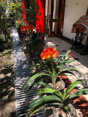 Jim's Tibetan Hotel – snímka