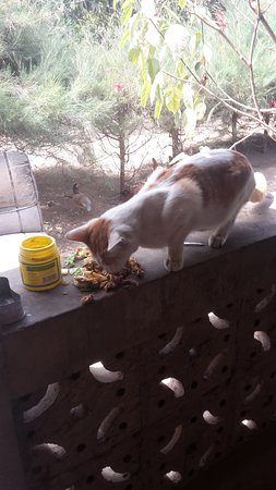 Our lovely cat Bleachy enjoying the meal at the local lodge in Tujereng