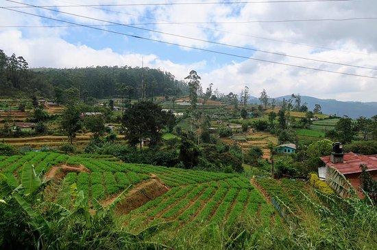 Bilde fra Kandy District