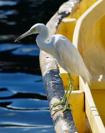 Recorrido fotográfico de Santa Lucía: Helping me take sharp and well framed photographs of birds.