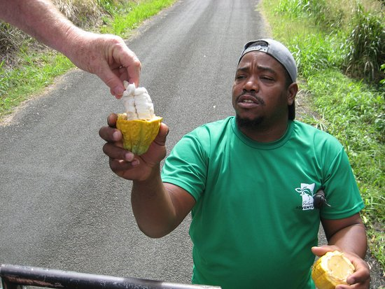 Jeep & Zipline Adventure in St. Lucia: Mason, our tour guide ... with Cocoa pod.
