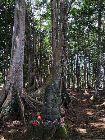 Sacred Rudraksha Forest