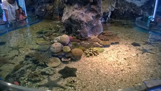 Rayong Aquarium: 31.08.14 สถานแสดงพันธุ์สัตว์น้ำระยอง - ระยอง