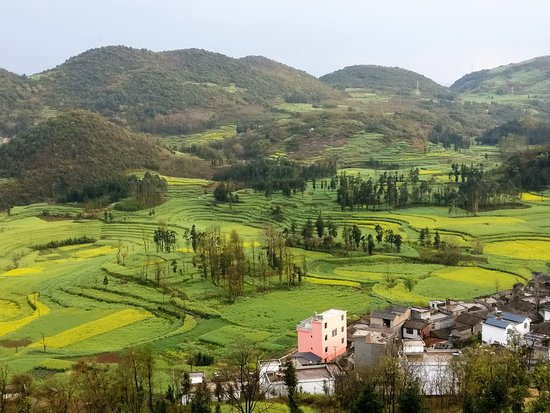 Luoping County, China: The Luosi field from a view point far up the hill