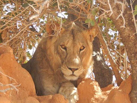 Kenya Watamu Safaris