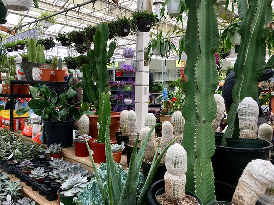 Hicks Nurseries
