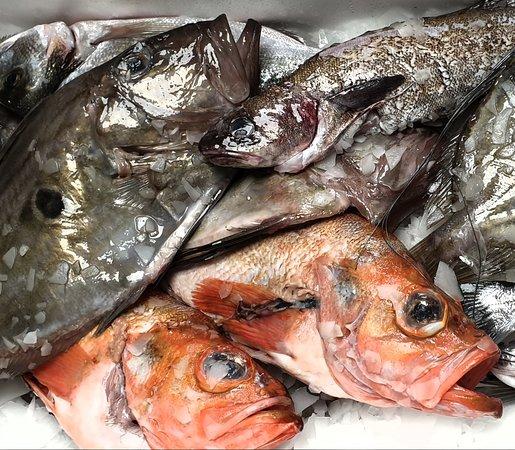 Arrivage journalier de poissons sauvages frais