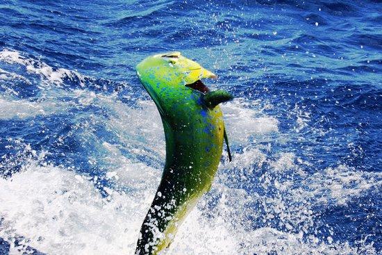 Treasure Coast Fishing Adventures