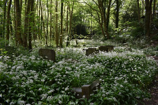 Image result for arnos vale cemetery wildlife
