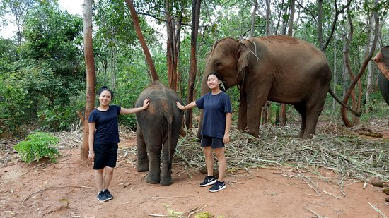 Surin, Thái Lan: Hangout with elephants at enclosure time.