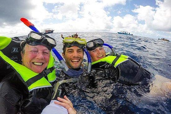 Excursão com encontro com tubarões...