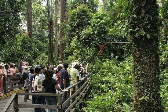 Centro de Rehabilitación de Orangután...