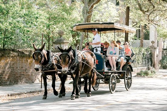 Daytime Carriage Tour of Historic...