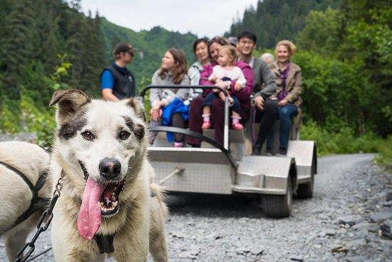 Paseo en trineo de perros salvajes y...