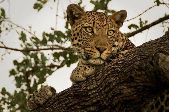Narlai Leopard Safari e Village Walk...
