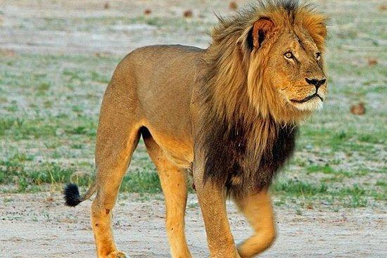 纳米比亚,博茨瓦纳和津巴布韦的14天美妙野生动物园(露营和住宿)