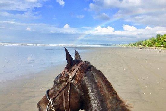 Beach Horseback Riding Experience.