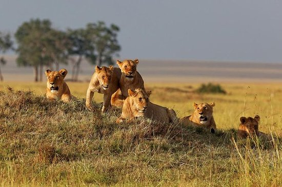 3-Day Ruaha National Park Safari...