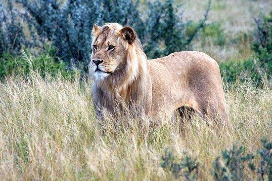 3-dagers Central Kalahari Game...