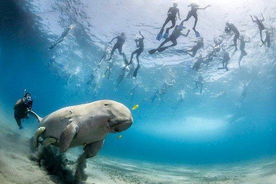 Snorkeling Dugong Tour & Garden...