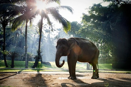 Taro Elephant Sanctuary with Ubud...