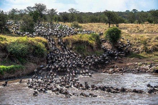 8 dias de migração Serengeti