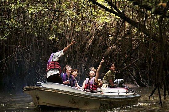 兰卡威红树林森林之旅