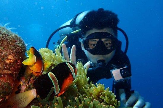 在巴厘岛图兰本潜水 - 美国自由海难点