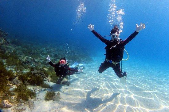 Yakushima Experience Diving