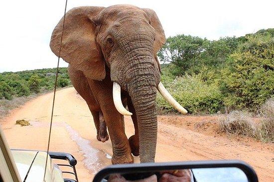Addo Elephant National Park - HD01