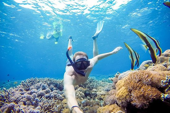 Special Package Snorkeling With Manta...