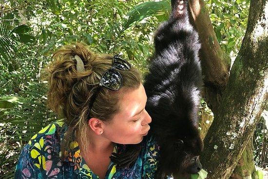 伯利兹城私人伯利兹动物园和吼猴保护区之旅