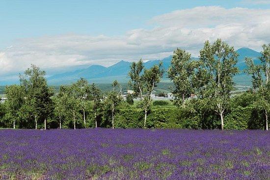 Explore Furano & Biei (Summer Tour)