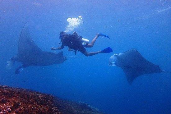 De Bali: excursion d'une journée de...