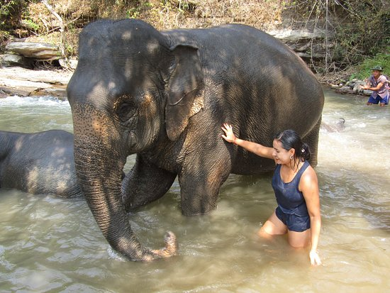 Half-Day Morning Visit to Elephant Jungle Sanctuary in Chiang Mai: banho