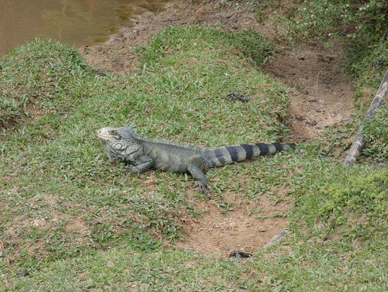 Activités Adultes : Visite guidée Animaux Carnivores | Zoo d'Amnéville