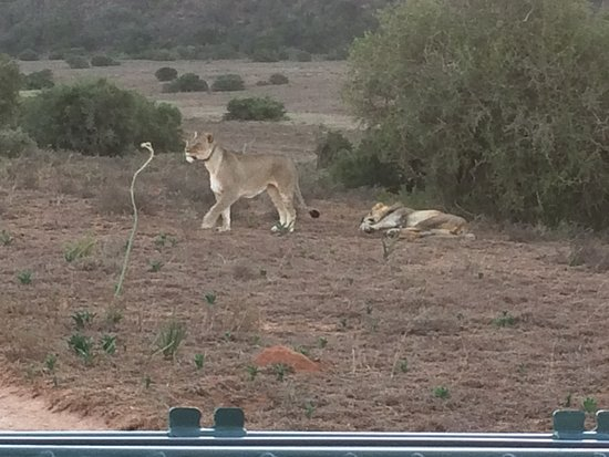 Amakhala Game Reserve, África do Sul: The residents at the reserve enjoying the sun