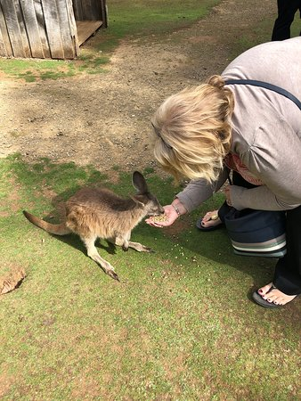 Taranna, Australia: A good experience for humans and animals.  Well worth a visit.